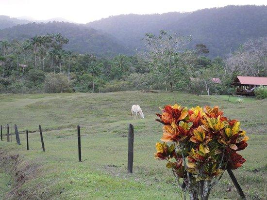 La Anita Rainforest Ranch: Resident La Anita horse, Trueno, grazing by the cabins