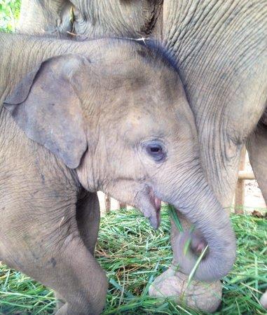 Elephant Village Sanctuary Day Trips: Elefanti