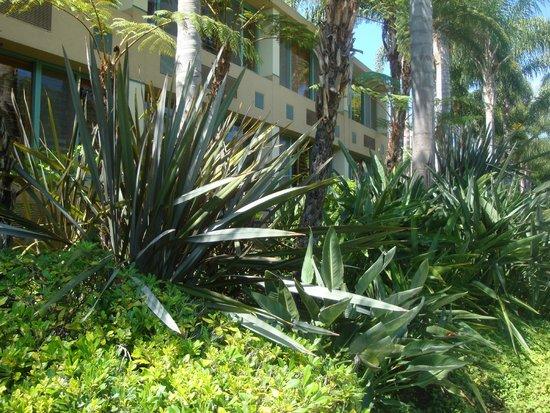 Sheraton La Jolla Hotel: Rooms on pool side