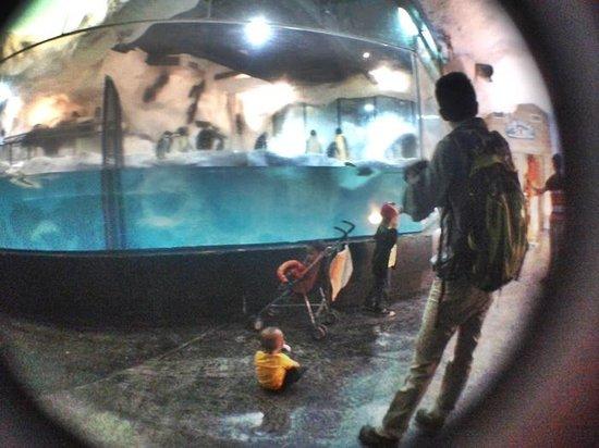 Manila Ocean Park: blurry aquarium glass