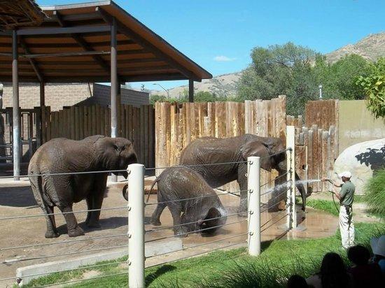 Utah's Hogle Zoo: The elephant encounter.