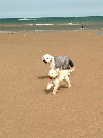 Traeth Lligwy: difs enjoying the beach