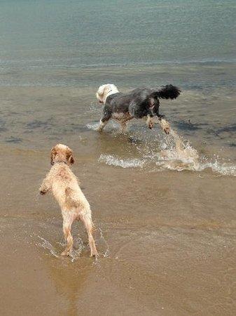 Traeth Lligwy: fun in the sea