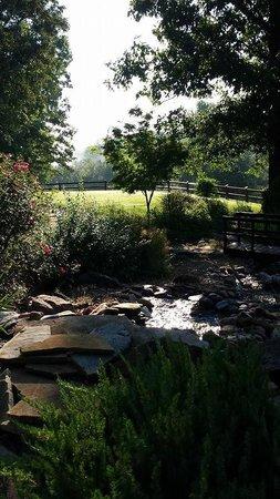 Buffalo River Lodge : Pond