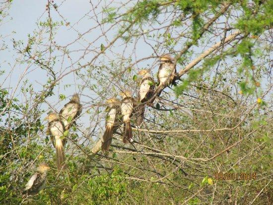 Ibera Lodge: Pirinchos secándose al sol