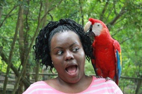 Gumbalimba Park: Hey my hair