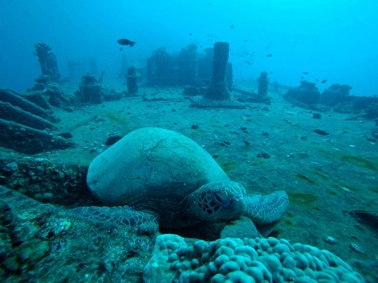 Kaimana Divers: Sea turtle resting on top of the Sea Tiger wreck (Labor Day weekend, 2014)