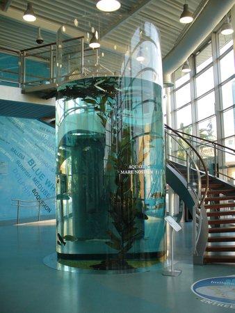 Aquarium Mare Nostrum : entree