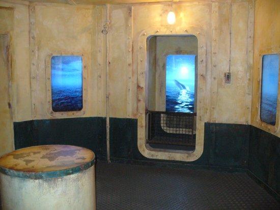 Aquarium Mare Nostrum : nautilus