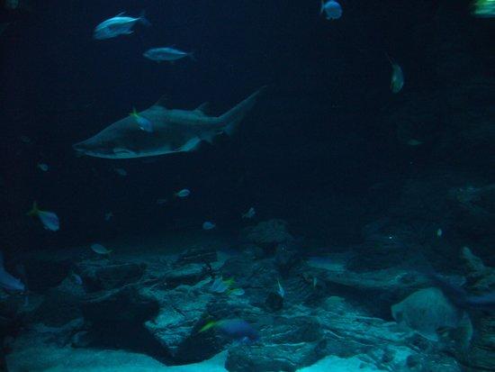 Aquarium Mare Nostrum : grand aquarium