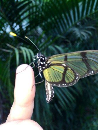 Mariposas de Mindo - Butterfly Garden: Mariposario Mindo ��