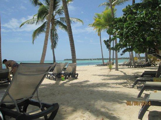 Royalton Punta Cana Resort Beach At Barcelo Bavaro Palace Deluxe