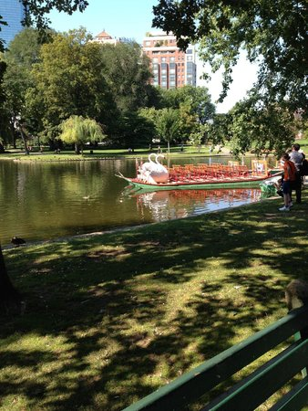 Swan Boats : Swan peddle boats