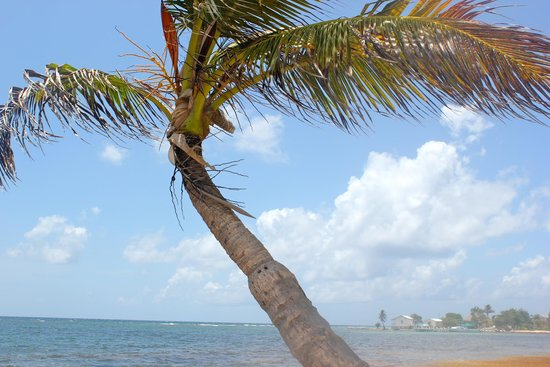 palm tree on resort