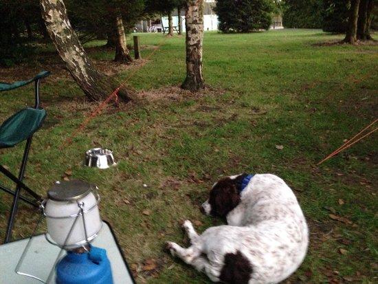 Packhorse Farm Camp Site: It's a dogs life!!