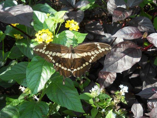 Norfolk Botanical Garden: Butterfly garden