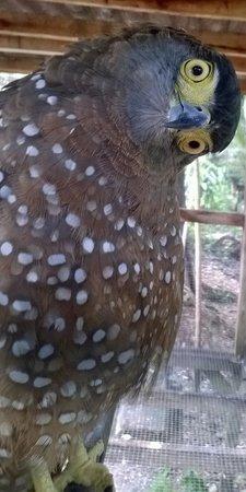 Cebu Zoo: Eagle