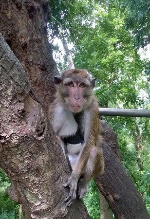 Cebu Zoo: monkey