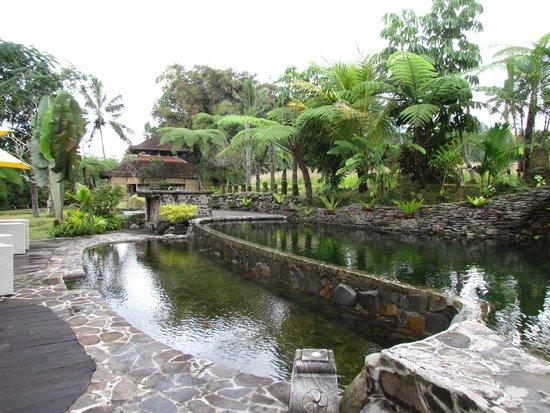 Prana Dewi Mountain Resort: la piscina