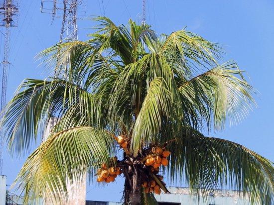 Plaza de Armas de Iquitos: Plaza de Armas