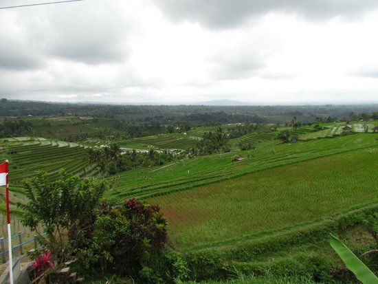 Jatiluwih Green Land: la valle