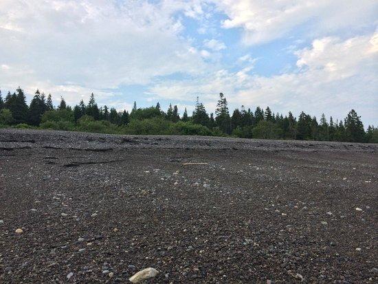 Machiasport, Maine: Trees surrounding beach