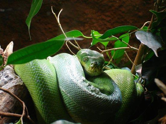 Piton Verde Bioparc Fuengirola