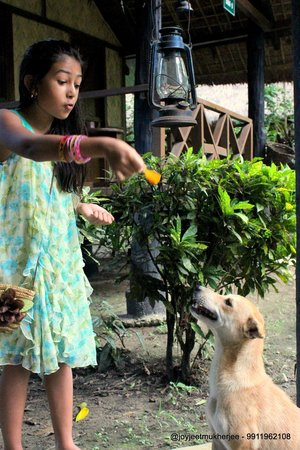 Nameri Eco Camp: The dog