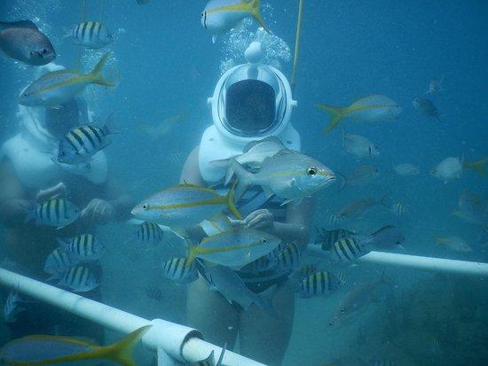 Sea Trek St. Maarten: Sea Trek