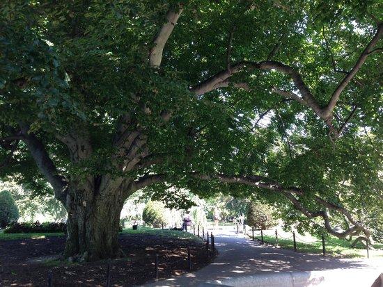 Beautiful Picture Of Boston Public Garden Boston