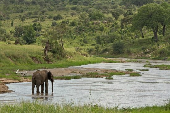 Maweninga Camp: Elephant in the Tarangire River