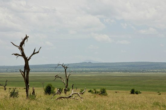 Maweninga Camp : View across the Silale swamp