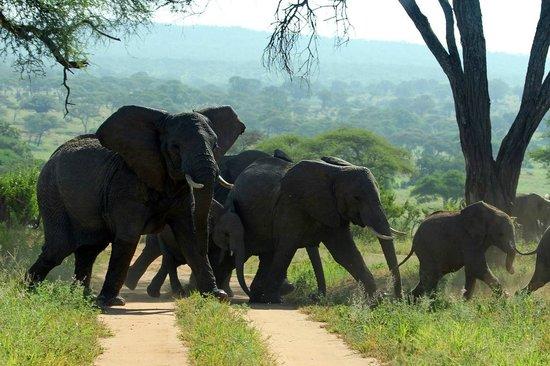 Maweninga Camp : Elephant family