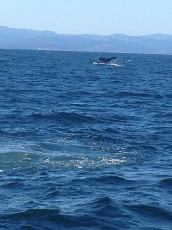 Western Prince Whale Watching : Humpback whale tail
