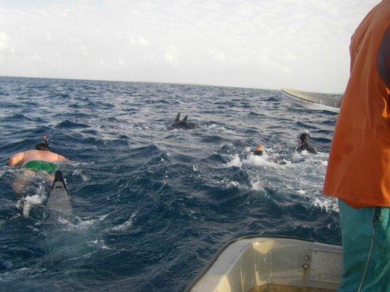 Kizidolphintours day tours: Nuotare con i delfini