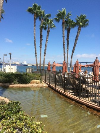 Coronado Island Marriott Resort & Spa : Bay View from room