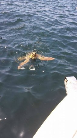 Dalyan Nehri: Turtle Beach