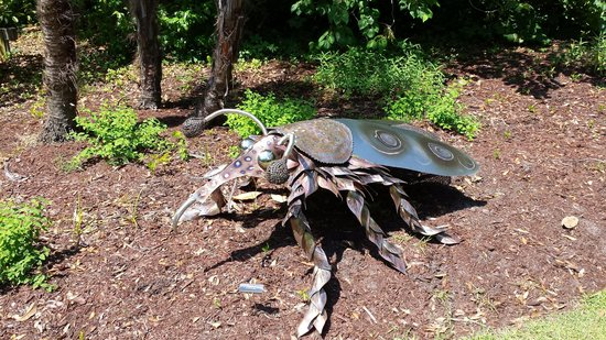"Airlie Gardens : One of the ""bugs"""