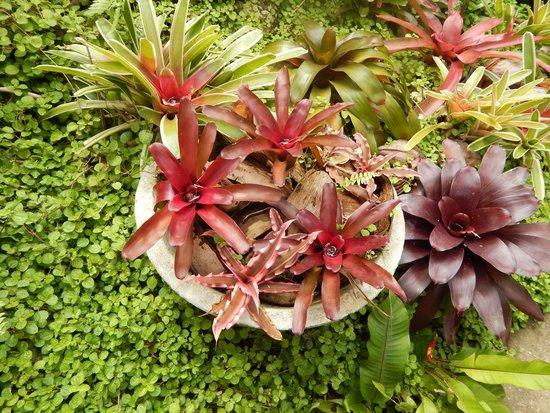 Hunte's Gardens : Flowers