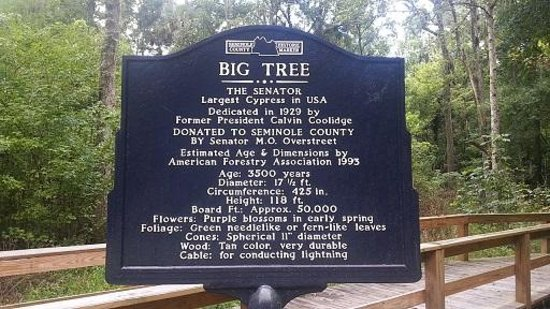 Big Tree Park : The Senator sign