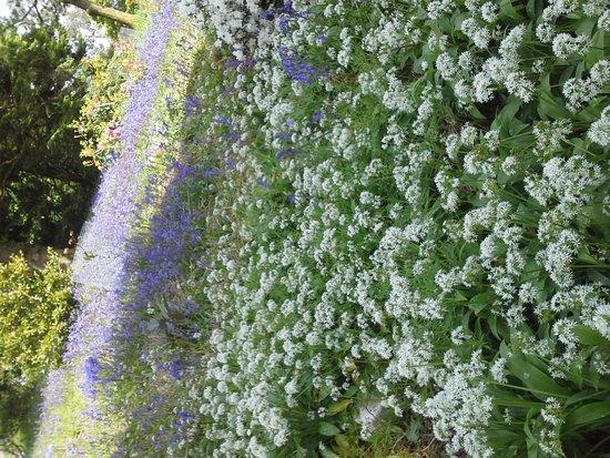Blarney Castle & Gardens: Wild flowers