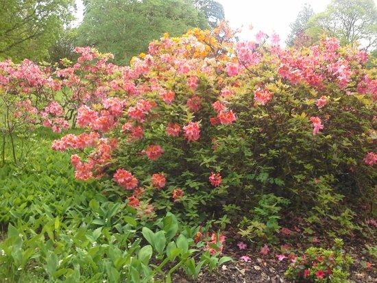 Blarney Castle & Gardens: Garden of flowers