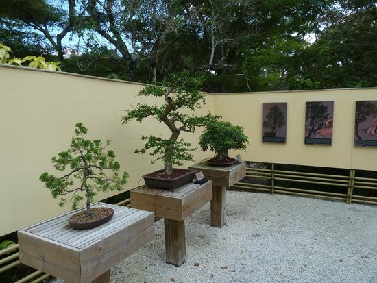 Bonsai garden Picture of Morikami Museum Japanese Gardens