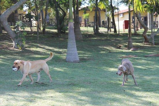 Recanto Alvorada Eco Resort : vista dos chalés