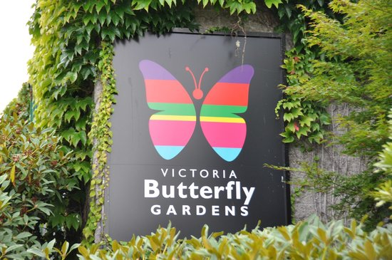 Buttertly Garden - Picture of Victoria Butterfly Gardens, Central ...