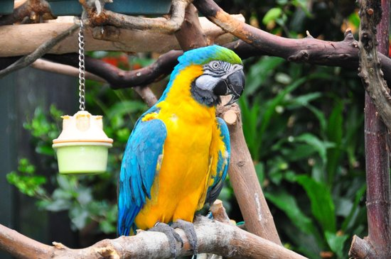 Exotic Bird - Picture of Victoria Butterfly Gardens, Central Saanich ...