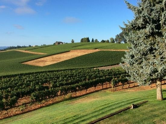 Wine Country Farm: the view from our balcony