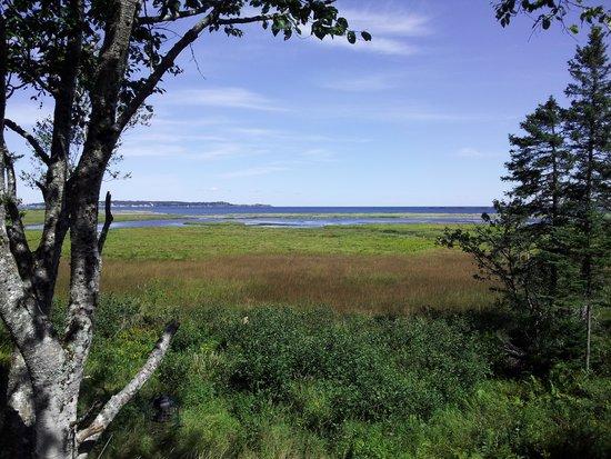 Castalia Marsh Retreat: View from Fern Alley in September