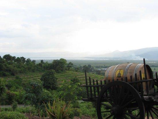 Red Mountain Estate Vineyards & Winery : Amazing views