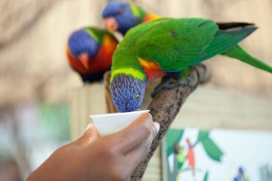 The Maritime Aquarium: Feeding the Lorikeets